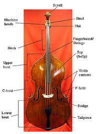 The basics of a bass