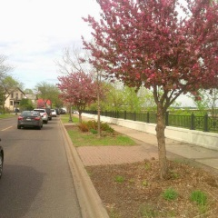 Trees are flowering. Photo from Bill Lindeke's blog
